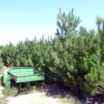 AlpineFarms-OurTrees1