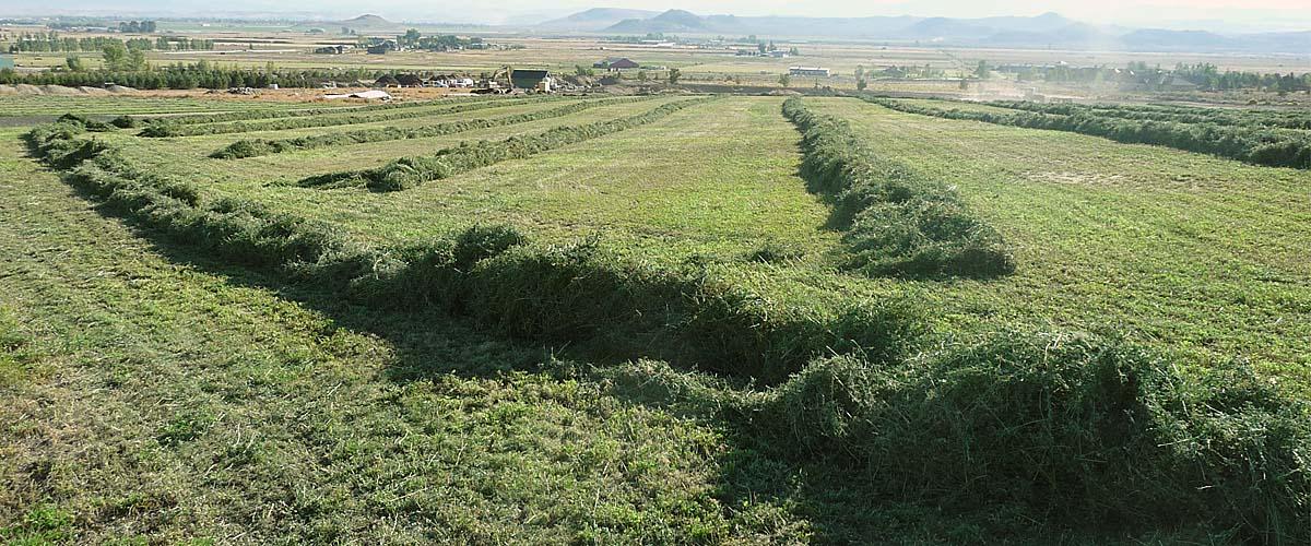 Slide_Alfalfa-Harvesting_1200x500