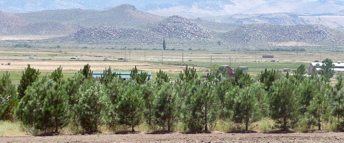 Slide_Tree-Farm-2_1200x500