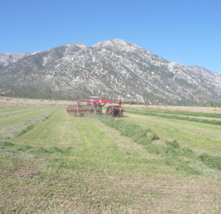 Alpine Farms - Harvesting Alfalfa