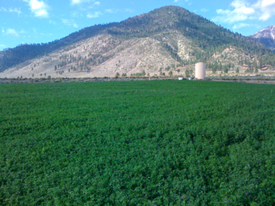 View of Our Alfalfa Fields
